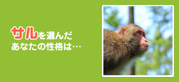 animal_monkey