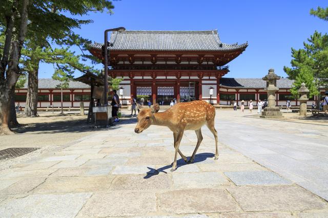 奈良県のおすすめ出会いスポットと県民性からみる出会いのコツ